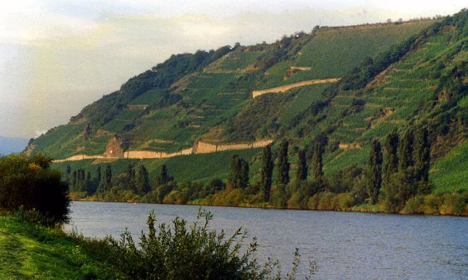 Vineyards along the Mosel River