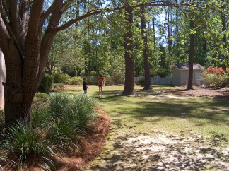 To a sunny backyard in Georgia